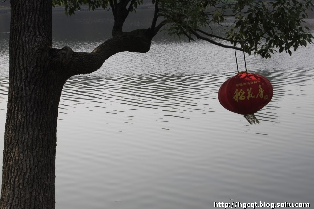 P12 三国公园湖边树上的灯笼