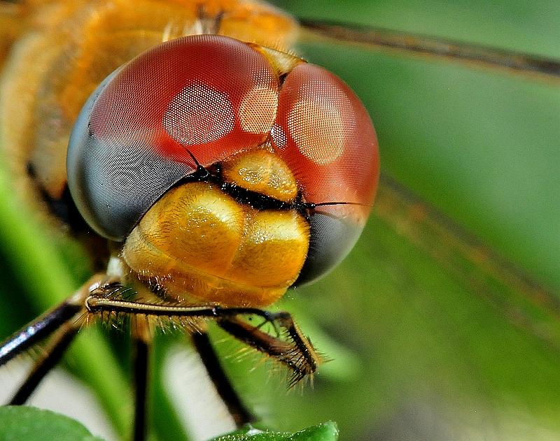 蜻蜓的复眼 - 在这片红色的土地上的博客