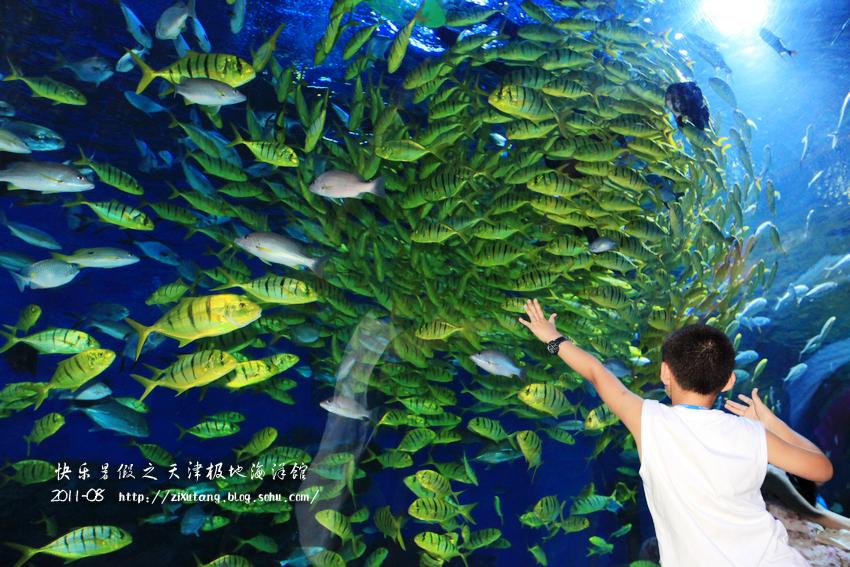 2011快乐暑假之天津海昌极地海洋馆