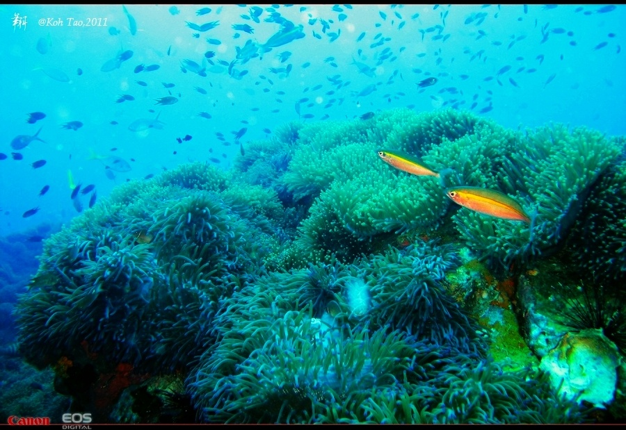 【泰国】龟岛(涛岛),全世界最大的潜水天堂