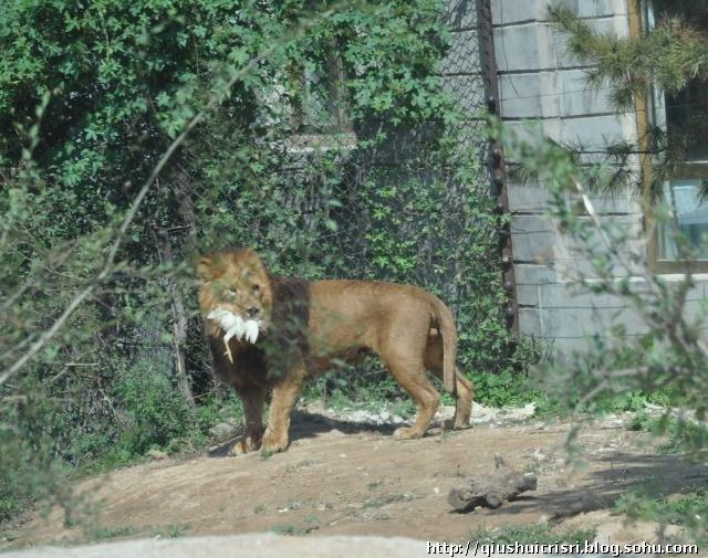八达岭野生动物园-阳光暖暖的家-我的搜狐