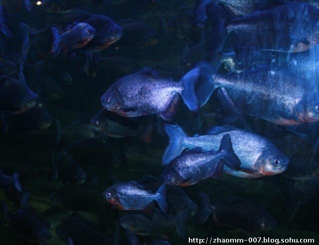 壁纸 海底 海底世界 海洋馆 水族馆 640_492