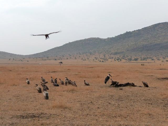 看过动物世界的人都清楚动物大迁徙的壮观