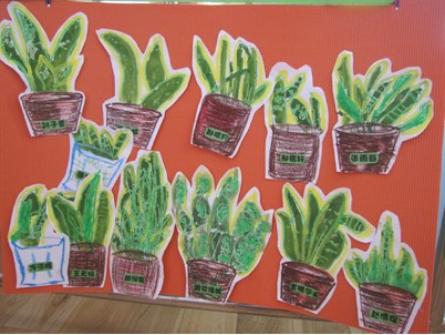 叶子王国   新学期,小朋友从家中带来很多绿色的植物!图片