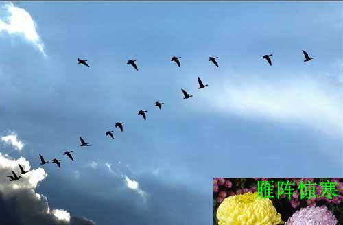 鸿雁向天空_鸿雁天空上是什么歌
