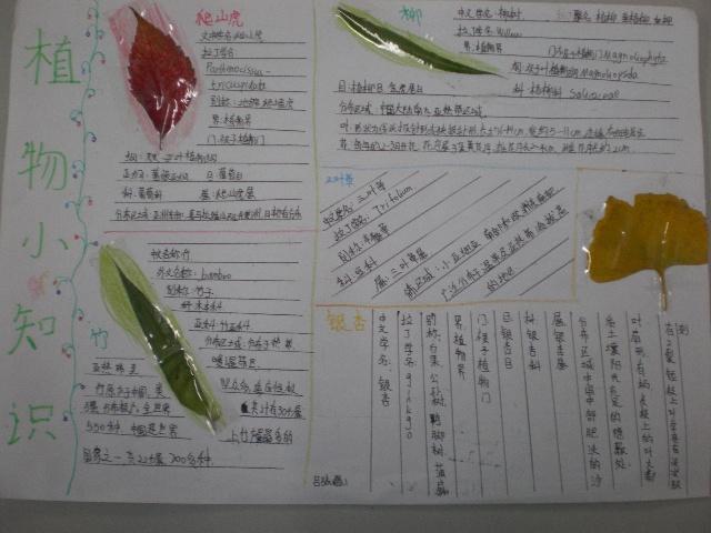 学生活动——搜集秋天的树叶