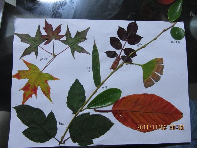 银杏树叶做的手工画图片大全;