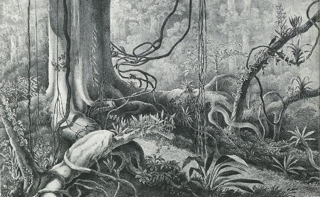 关于热带雨林的几张手绘