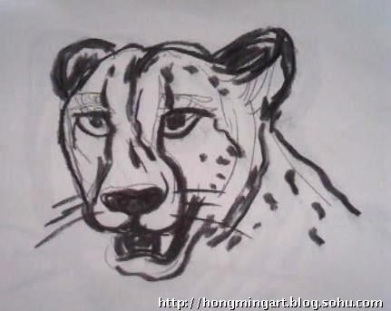 和豹子近距离接触,画了大量的速写