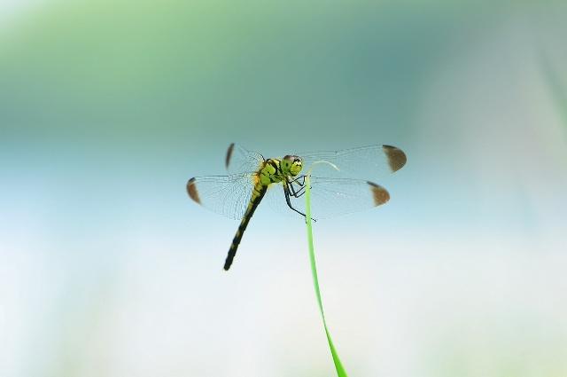 人类的许多仿生学都是从蜻蜓身上得到了启发