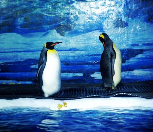 大连掠影之极地海洋动物馆篇