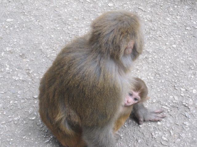 小猴子和其他动物拥抱图片