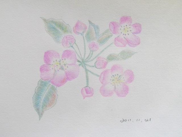 我的彩铅画