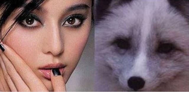 狐狸妆的画法步骤